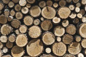 Beskæring af træer - brænde til vinteren