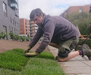 Lægning af rullegræs
